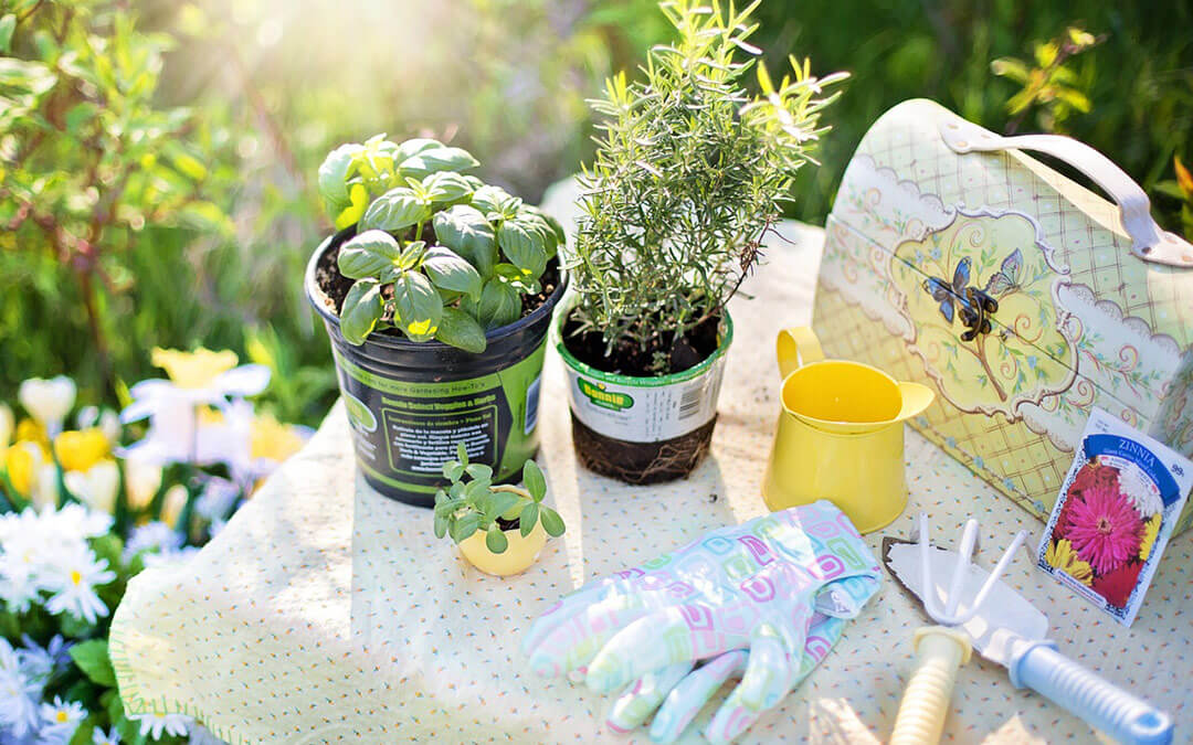 Start gardening early spring & grow more